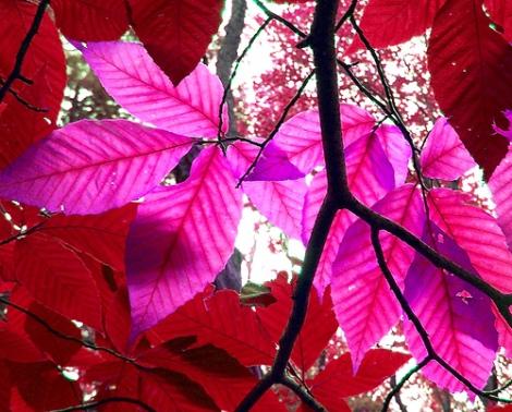 leaves, breeze, jasmine, memory {image via flickr)