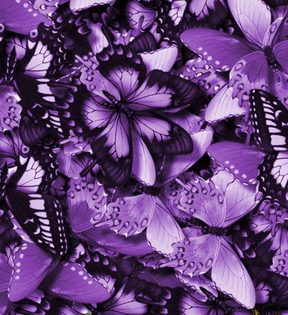 violet butterflies transformed {Wiki Graphic}